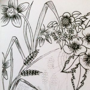 drawing nature flowers