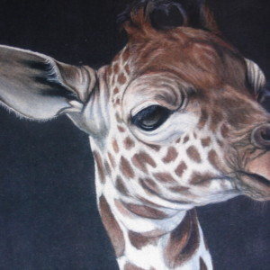 Giraffe - Gayle