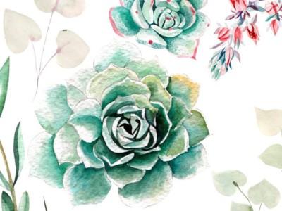 Succulent Watercolor Paintings - Copy