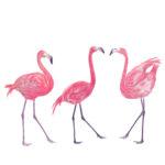 Watercolor flamingos on white background